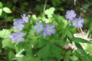 Backyard wild flowers